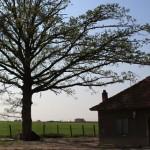 Nhà có cây to trước cửa có tốt theo phong thủy?